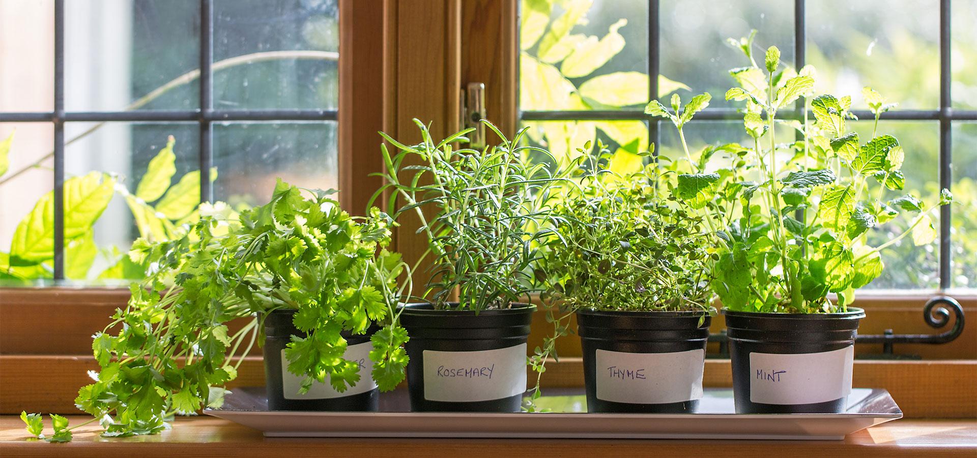 Hemmeligheten bak egenprodusert krydder rett fra hagen